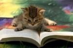 leergato
